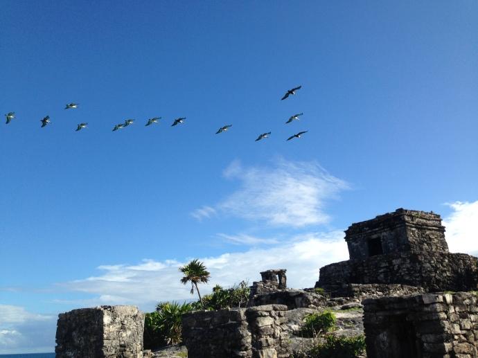 Aves sobre Tulum