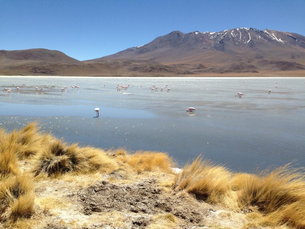 Desierto Boliviano