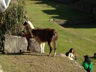 Machu Picchu_01