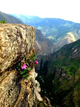 Wyna Picchu_5